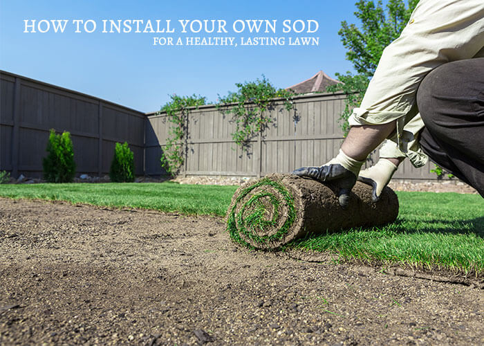 Get healthy grass with a DIY sod installation - read our guide for instructions!