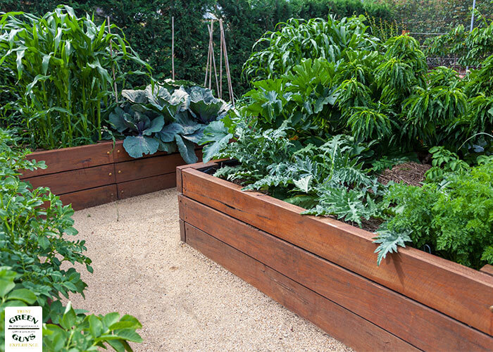 Raised beds make gardening easy whether it's carrots or chamomile