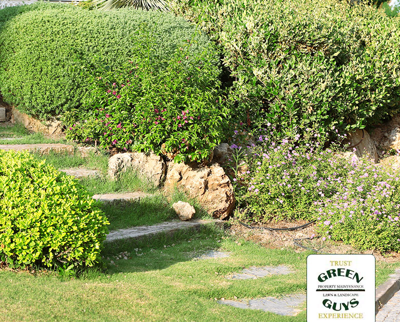 Shows Overgrown Shrubs and Pavers in need of a landscaping renovation